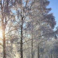 Искристый снегопад. :: Наталья Юрова