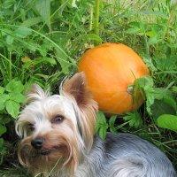 Мой пес :: Виктория Чурилова