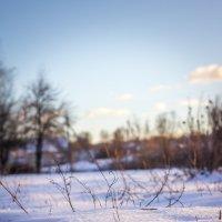 Снежок на огороде :: Артур Моргун