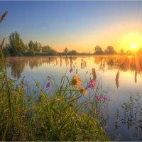 На лесном озере :: Nikita Volkov