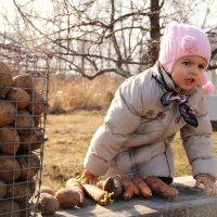 """""""Картошку,морковку подходим,покупаем!"""" :: Евгения Бурлуцкая"""