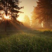 Виктор Тулбанов - Рассвет в сосновом лесу
