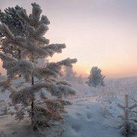 Евгений Никитин - Зимний лес