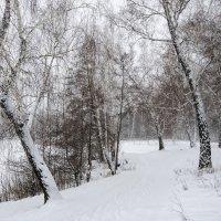Заждались снега. :: Сергей Адигамов
