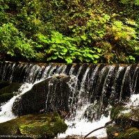 Подножие водопада Шипот, Закарпатье, Украина :: Vadzim Zycharby