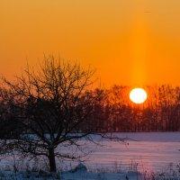 Зимнее солнце :: Igor Yakovlev