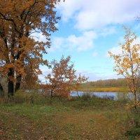 Краски Осени :: Анастасия Никитина