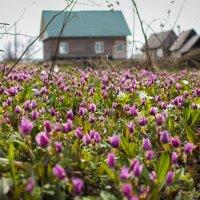 Сибирская весна. :: Станислав Сорокин