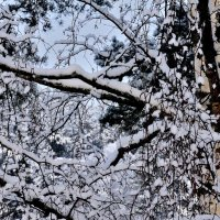 Снег. :: Leonid Volodko