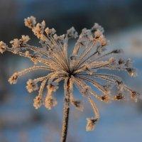 Серебро зимы. :: Victor Klyuchev