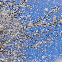 Снежно :: Ирэна Мазакина