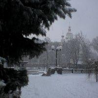 Снежная тема :: Наталья Тимошенко