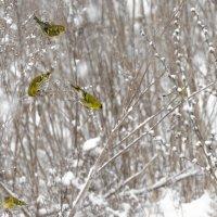 Зима :: Евгений Хаустов