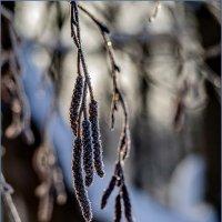 Морозный день :: Наталья Rosenwasser