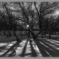 Солнечные тени января.. :: Вера Лучникова