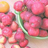 apples :: Tori Kineli