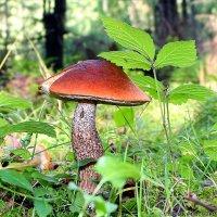 грибы :: Laryan1