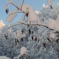Серёжки в снегу... :: Маргарита Дворянникова