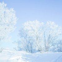 Наша северная красавица-зима))) :: Лариса Сафонова