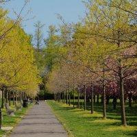 Весна :: Galina Kazakova