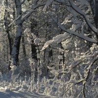 В зимнем лесу :: Юрий Цыплятников
