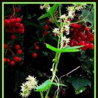 Цветущая трава и калина 0 :: Владимир Хатмулин