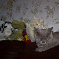 Спят усталые игрушки... :: tobol-b