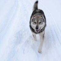 Собака :: Павел Чекалов