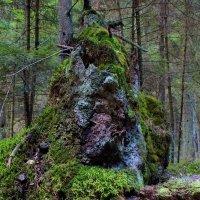 Лесной замок :: Юрий Мухин