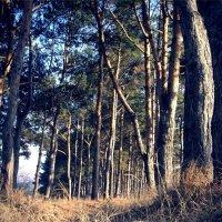 лес :: Виктория Обрывченко