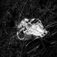 мрак :: Виктория Обрывченко