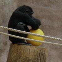 зоопарк Праги :: виктория иванова