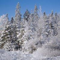Зимние дни :: Табаско Перчик
