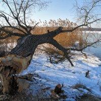 На озере :: Лариса Кайченкова