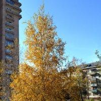 Осенняя красавица :: Борис Русаков