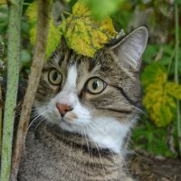 Cat :: Vera Baksheeva