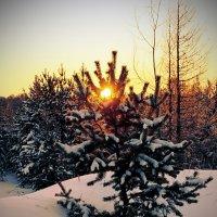 Утро морозное. :: Алексей Хаустов