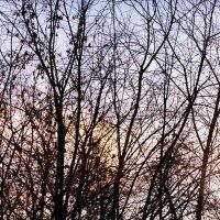 Деревья на закате :: Евгения Анисимова