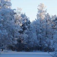 Зимний день на речке :: Валерия заноска