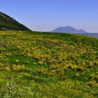 Кавказ :: Ник Карелин