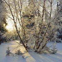 Закат в лесу :: Сергей Бушуев