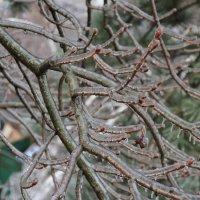 Ледяные ветви :: May Krukova