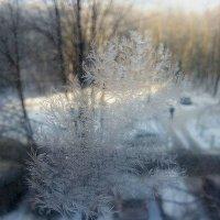 узор на окне только один в виде веточки мороз нарисовал :: Ирина ***