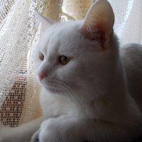 Мой кот. :: Юрий Мошкин