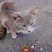Бездомный кот :: Татьяна Рудникова