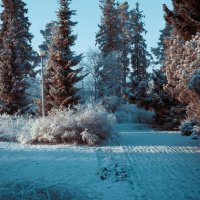 Зима :: Ksenia Crocker