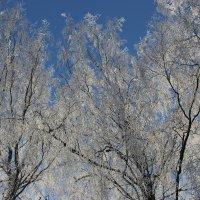 Зимний день :: Mariya laimite