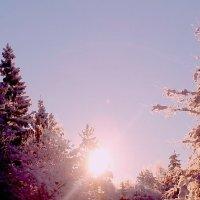 Мороз и солнце. День чудесный! :: Наталья Трифонова