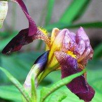 цветы :: юрий иванов