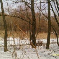 Зима, лес :: gor4inka Koryagina